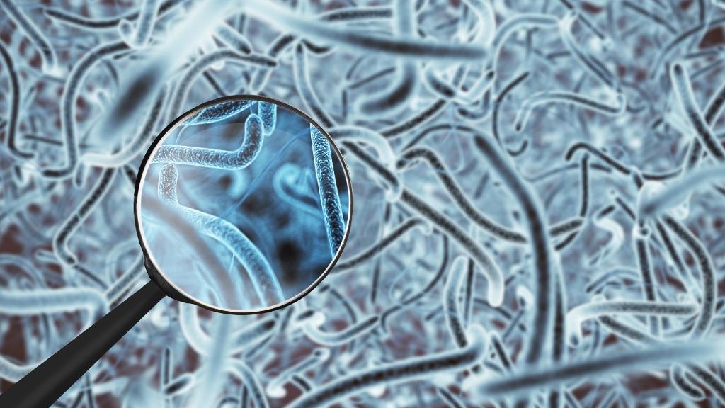 Lo studio del microbioma nel cuoio capelluto e nei follicoli piliferi