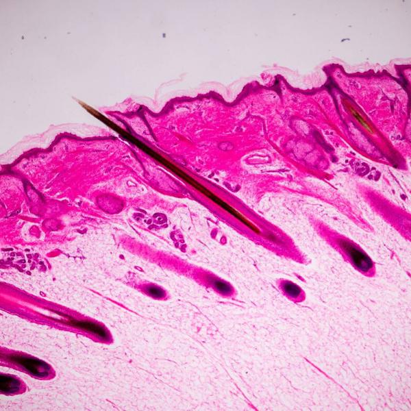Il ruolo delle <b> poliammine </b> nella crescita dei capelli